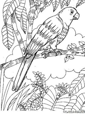 Coloriage en ligne coloriage perroquet gratuit animaux - Coloriage de perroquet ...