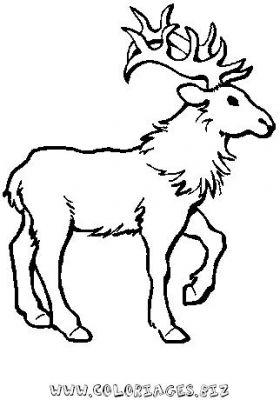 Coloriage en ligne rennes du pere noel gratuit 9449 noel - Dessin renne de noel ...