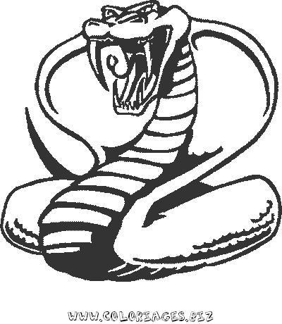 Index of albums photos serpents - Dessin de serpent ...