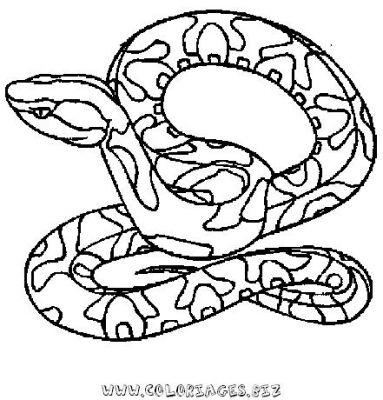 Coloriages serpents page 1 animaux - Dessin de serpent ...
